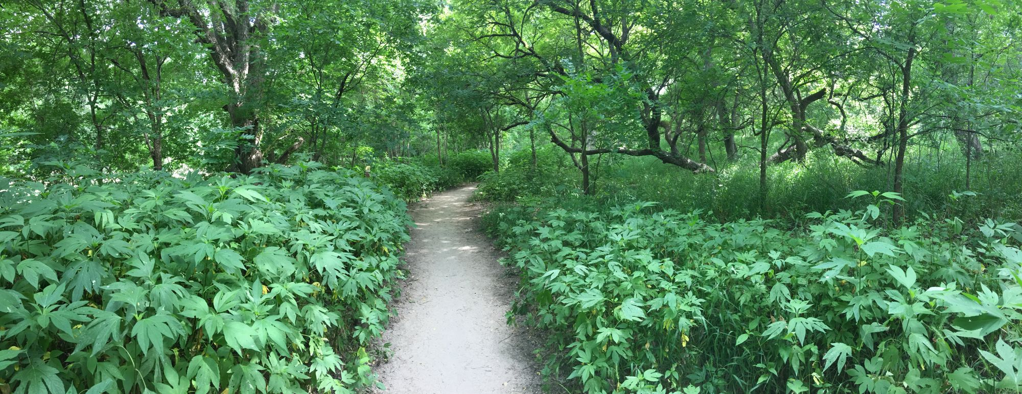 My Green Space: Barton Creek Greenbelt